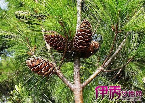 树木种类图片及名称 了解4种不同地域树种图片