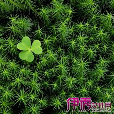 【图】苔藓植物生长环境如何 为你介绍苔藓在自然界中的4点作用