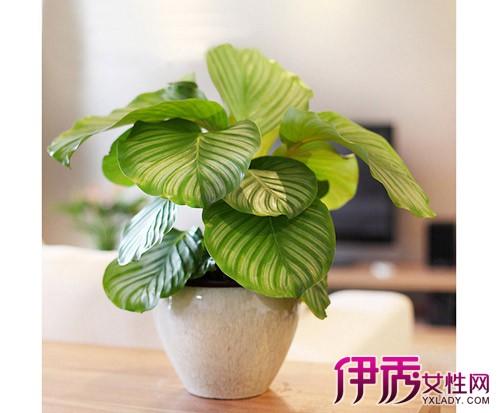 室内摆放的各种花卉图片及名称 小地方有大讲究图片