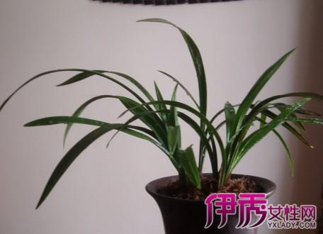 紫砂花盆PK兰花盆 兰花种植的小秘密图片