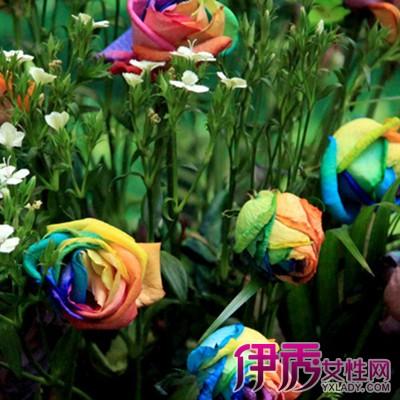 七彩玫瑰花海图片欣赏 七彩玫瑰花花语是什么