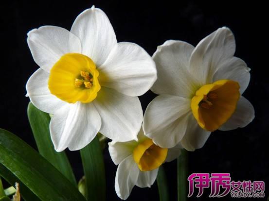 5172,凌波仙子月下来(原创) - 春风化雨 - 诗人-春风化雨的博客