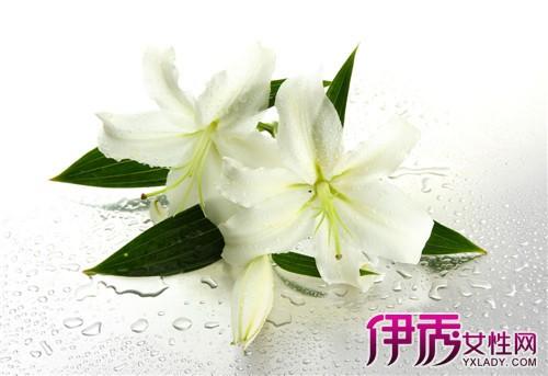 【图】百合花的种植和养殖方法大全 教你轻松种出美丽的百合花