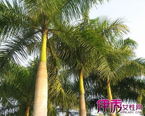 【图】热带植物图片及名称大全 带你认识几种常见热带植物