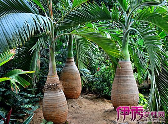 【热带雨林植物】【图】热带雨林植物详解