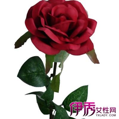 玫瑰花语大全带图片英语