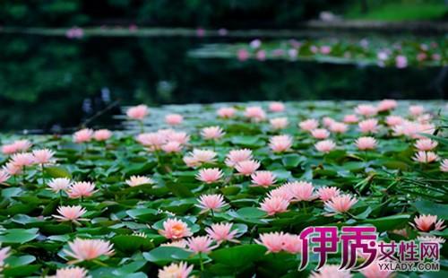 【常见的水生植物有哪些】【图】常见的水生植物有