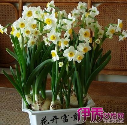 水仙花繁殖方法图解