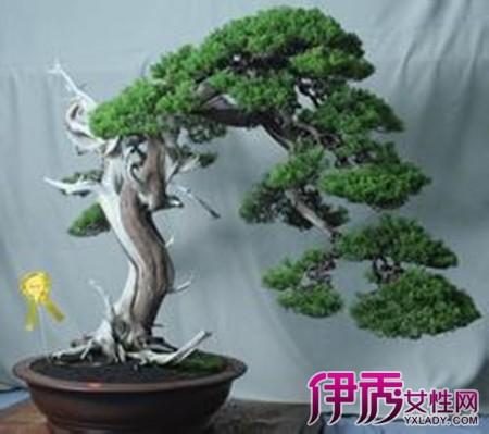 【图】有关地裁后珍稀杂木树桩盆景图片 让你欣赏到美丽盆景