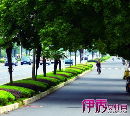 【图】北方绿化树木名称及图片 让你了解十五种绿化树木