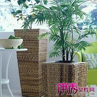 【图】客厅盆栽绿植图片