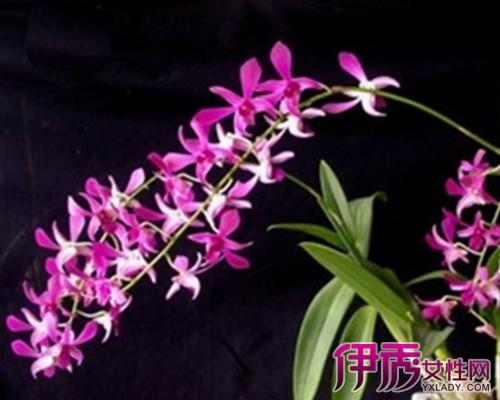 石斛兰的栽培方式一般为盆栽