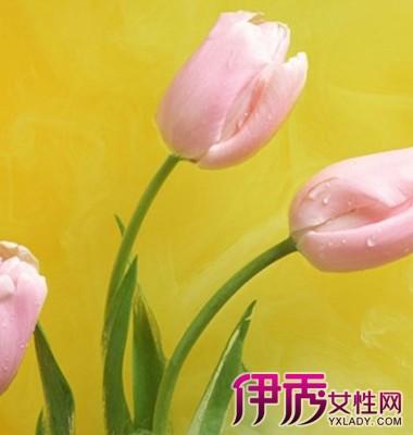 【郁金香代表什么意思】【图】郁金香代表什么