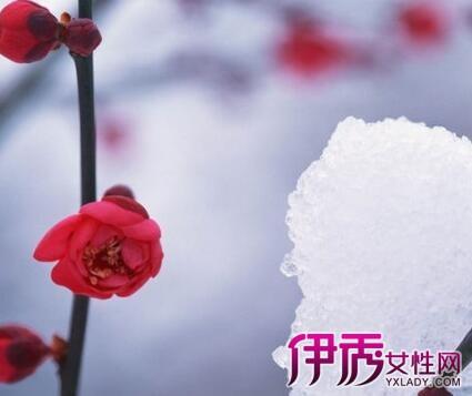 【雪景红梅花图片】【图】雪景红梅花图片分享
