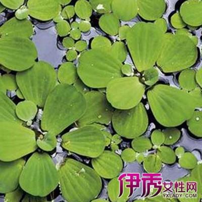 【双子叶植物有哪些】【图】介绍双子叶植物有哪些