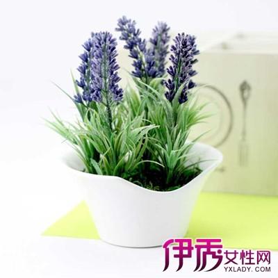 薰衣草怎么种_【图】盆栽薰衣草种植方法介绍6个方面教你种出漂亮