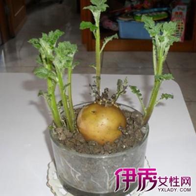 葫芦盆栽方法图解
