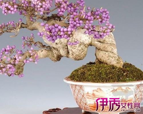 【图】紫藤树盆景图片大全 紫藤的生长习性详解