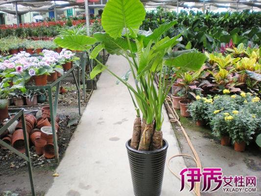 哪些室内植物盆栽最适合 十四种绿植客厅内盆栽推荐
