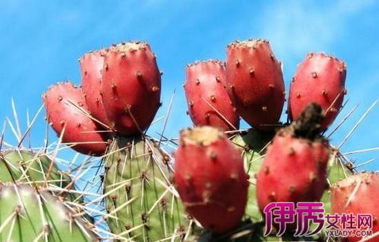 【图】仙人掌果图片欣赏