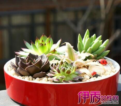 【图】肉球植物盆栽图片大全 揭秘多肉植物种植环境