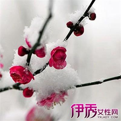 小树枝梅花超轻粘土