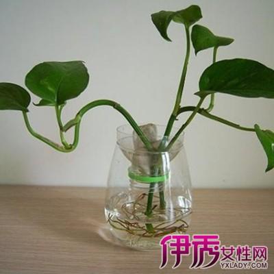 再把种好的花盆放于塑料桶