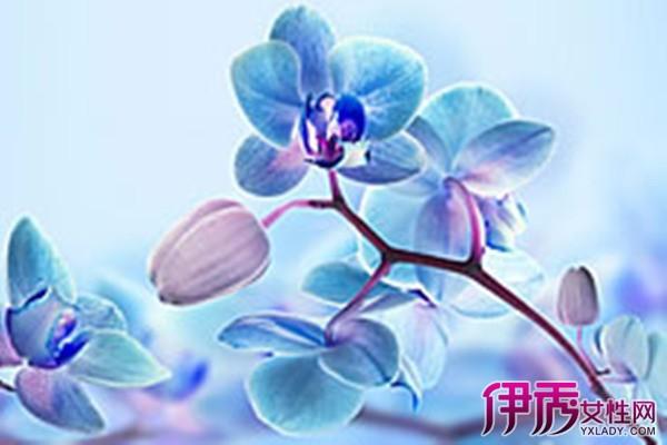 【图】蓝色彼岸花花语是什么 彼岸花是来自黑暗的爱情使者