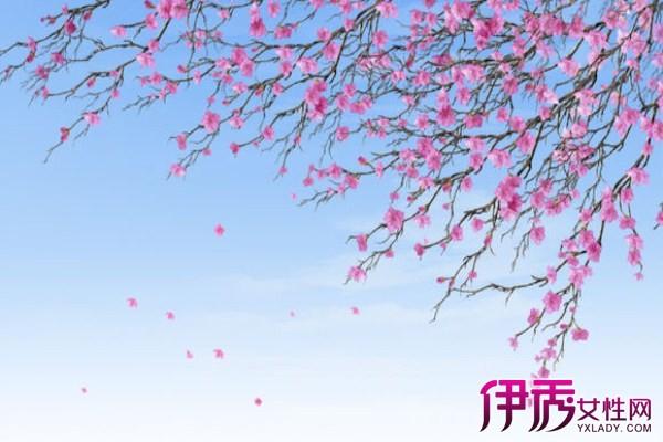 【樱花花瓣飘落图片】【图】樱花花瓣飘落图片分享