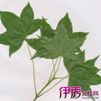 【梧桐树的叶子像什么动物】【图】梧桐树的叶子像呢