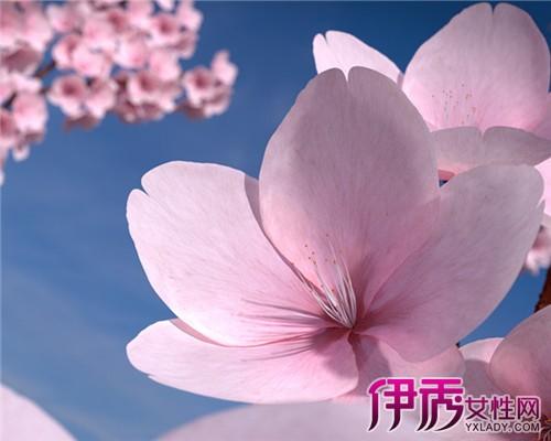 【图】桃花花瓣形状像什么呢 教你几招种植桃花的方法