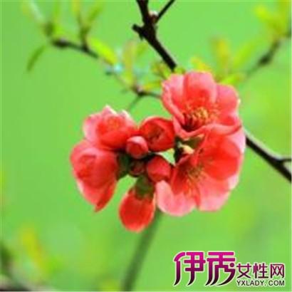 【图】铁杆海棠盆景图片大盘点 其养殖方法和注意事项大放送