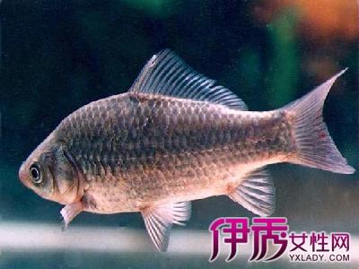 【图】鲫鱼身上有红斑代表什么呢?能吃下去吗?