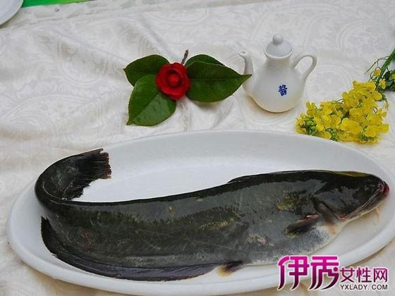 【清江鱼和鲶鱼的区别】【图】清江鱼和鲶鱼的