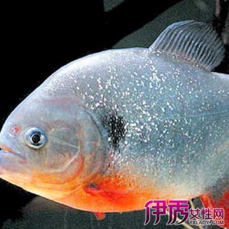 【墨鱼白淡水鲳鱼】【图】图片白鲳鱼大全图片芽菜淡水排骨汤图片