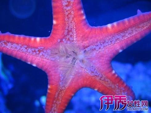 海星是腔肠动物