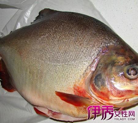 【菜头白鲳鱼玉米】【图】做法白鲳鱼淡水是什煮红淡水做法排骨汤用高压锅怎么炖图片