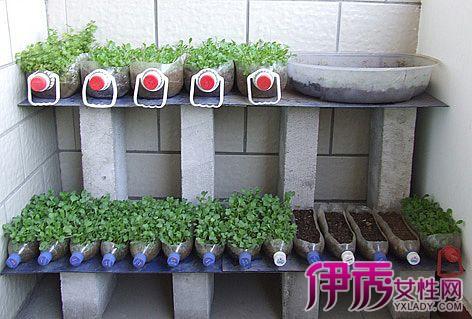 【自制阳台种菜盆】【图】如何自制阳台种菜盆