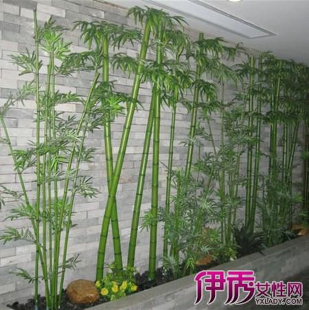 【图】竹子装修效果图大全 专家支招教你挑选与保养