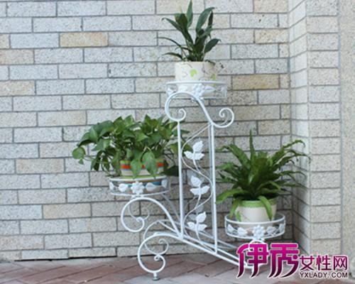 室内实木花架图片大全 营造出悠闲舒畅和自然的生活情趣