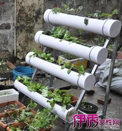 自制阳台种菜盆?
