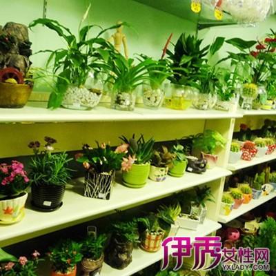 【图】小型花店装修效果图观赏 介绍其装饰技巧及其风格