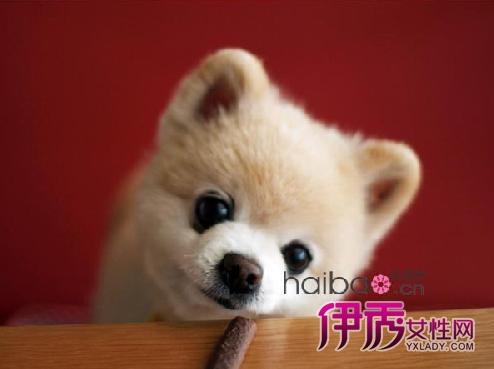 伊秀生活网 宠物 / 正文  俊介那可以和玩偶以假乱真的可爱模样,瞬间