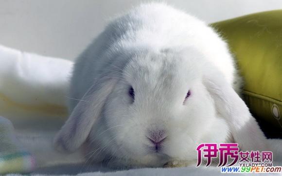 兔子天性就胆小 平时最好少洗澡 图图片
