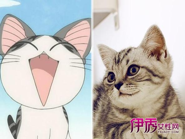 简约黑白卡通猫猫