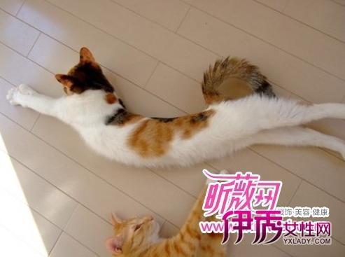 伸懒腰表情包 猫咪分享展示图片