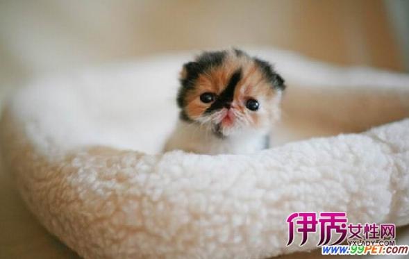 世界上最可爱的猫咪kitty出炉(多图)