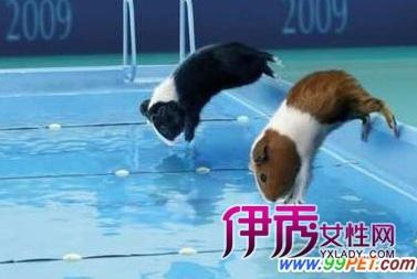 资料图:小仓鼠可是运动健将哦-别开生面的仓鼠赛车比赛 多图