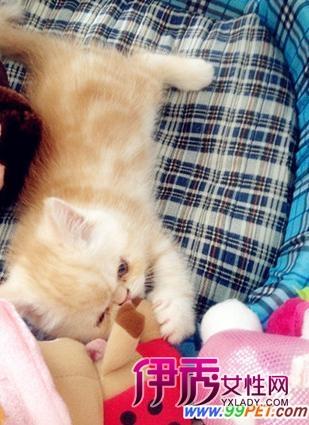 家有小萌猫;; 史上最萌小猫咪! 楼主; 家有小萌猫(多图)