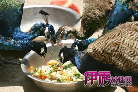 蔬菜雕刻孔雀